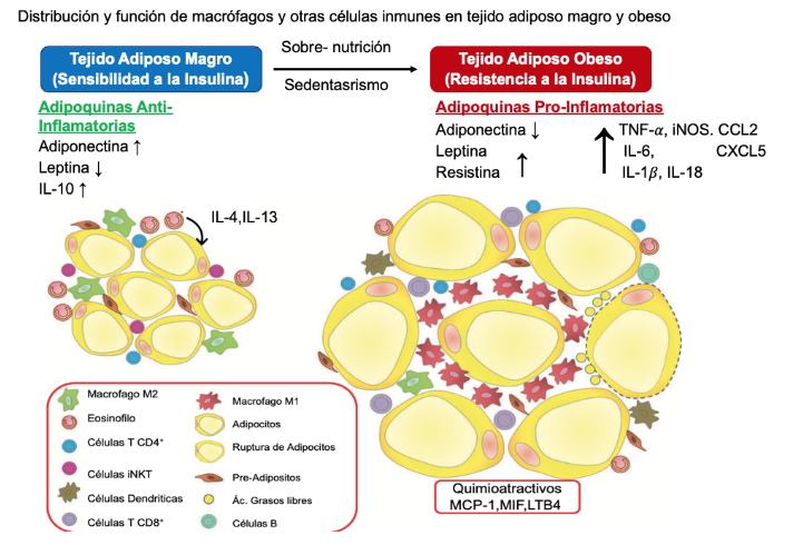 Sick fat the good and the bad of old and new circulating markers of adipose tissue inflammation