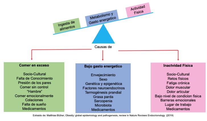 explicativo de las causas de la obesidad